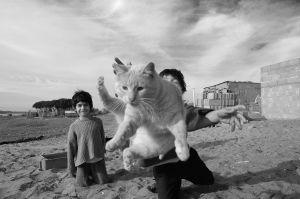 12-relacion-con-animales-(1).jpg
